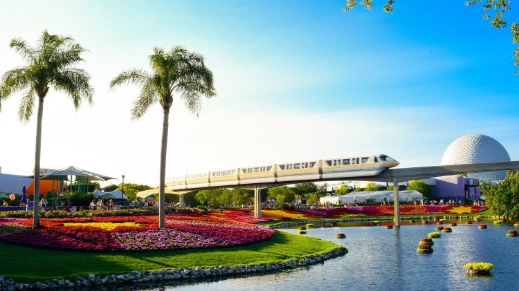 visit orlando| palm trees| epcot| magical express| epcot| disney world| orlando on a budget